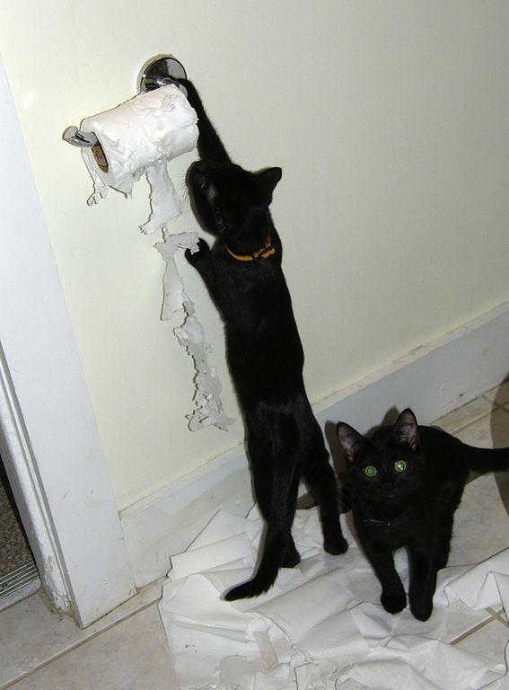 表向きに設置されたトイレットペーパーで遊ぶ飼い猫 Image Credit: Dan4th in flickr